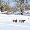 Kentucky Winter 3