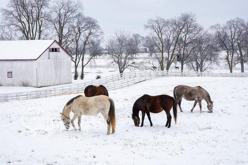 Calumet Winter 4