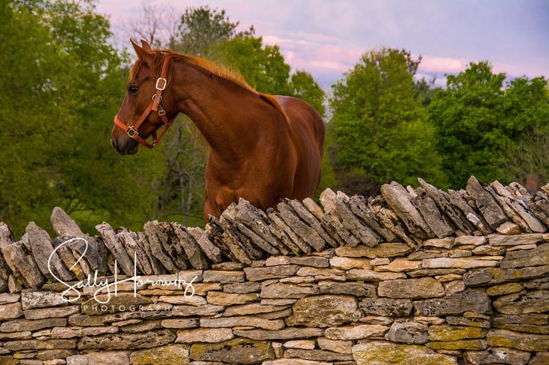 Shaker Horse 2