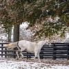 Winter Frolic