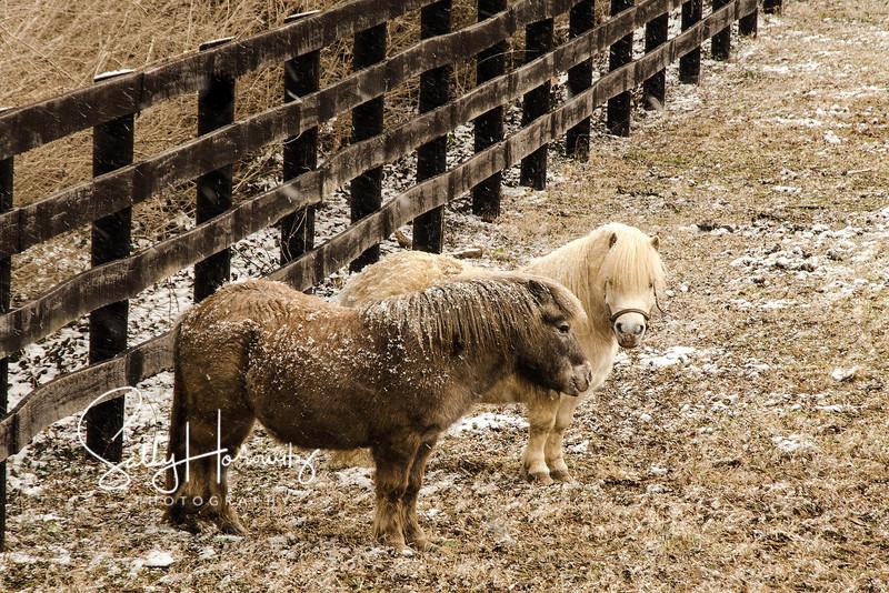 Cold Ponies