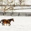 Kentucky Winter 2