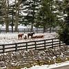 A Kentucky Winter