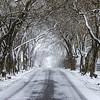 Pisgah Winter