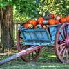 Shaker Harvest