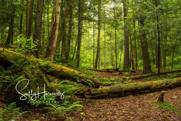 Sally Horowitz Nature Photography