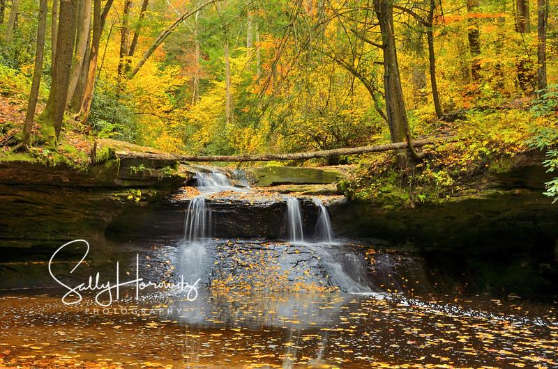 Creation Falls, autumn