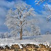Woodford Winter