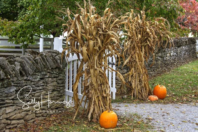 Fall at Shakertown
