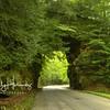 Wrigley Arch