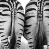 Zebra Butts in black and white