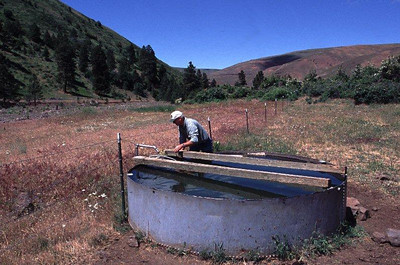 A solar powered pump brings water to a trough that is fenced away from a salmon bearing stream in eastern Washington.
