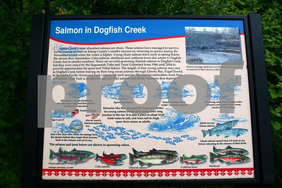 Sign explaining salmon habitat restoration on Dogfish Creek, Poulsbo, WA.