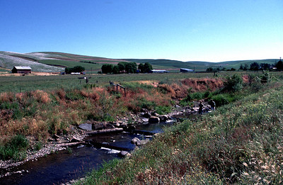 "Patit Creek ""after"" removal of a dam preventing migration of salmonid fish species. June 20, 2002."