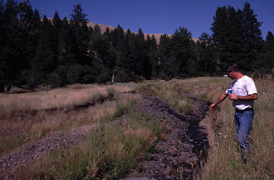 Before riparian plantings and placement of large organic debris for restoring salmon habitat. July 20, 2000.