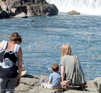 Left to right, Mom Ashlyn Vicars of Oroville with her two boys Axle 2 and 2-month-old Lane (in backpack watch salmon jump with Taylor Cosby of Chico at right near the fish barrier dam near the Feather River Fish Hatchery in Oroville, Calif. Thurs. Sept. 13, 2018. (Bill Husa -- Enterprise-Record)