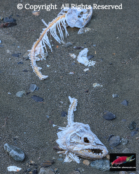 Skeletal remains
