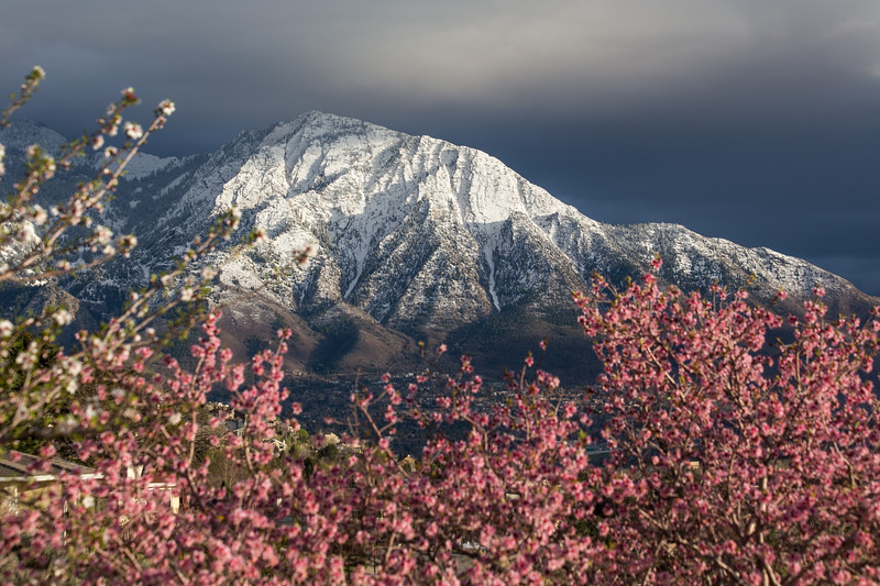 Spring in the Wasatch