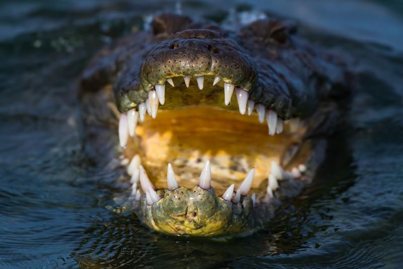 Nice teeth.