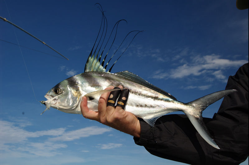 Roosterfish, Cabo San Lucas, Mexico Blue Water Fly Fishing