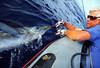 Relase Striped Marlin, Ray Beadle, Long Range Fly Fishing, Mexico Blue Water Fly Fishing