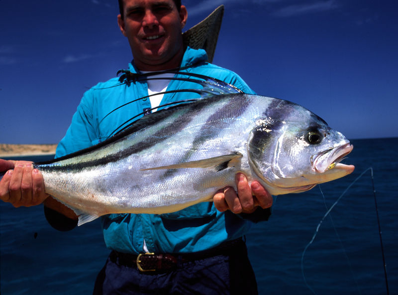 Rooster Fish and grat Hartman, Cabo San Lucas Mexico, Blue Water Fly Fishing