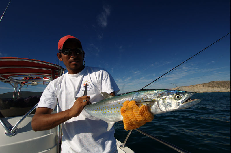 Sierra Mackerel, Cabo, Blue Water Fly Fishing