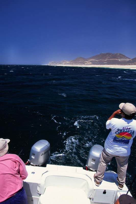 Teasing Roosterfish, John Randolph, Cabo, Blue Water Fly Fishing