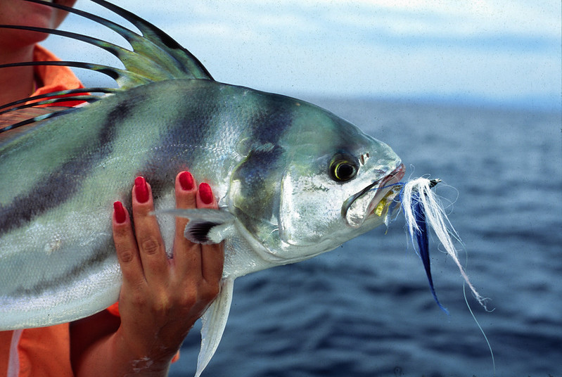 Roosterfish with fly, Mainland mexicoBlue Water Fly Fishing