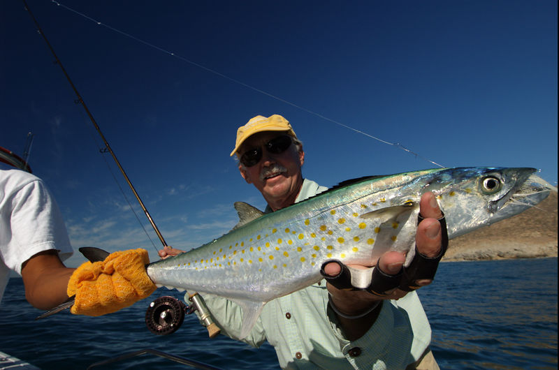 Sierra Mackerel, Dan Dryer, Cabo,  Blue Water Fly Fishing