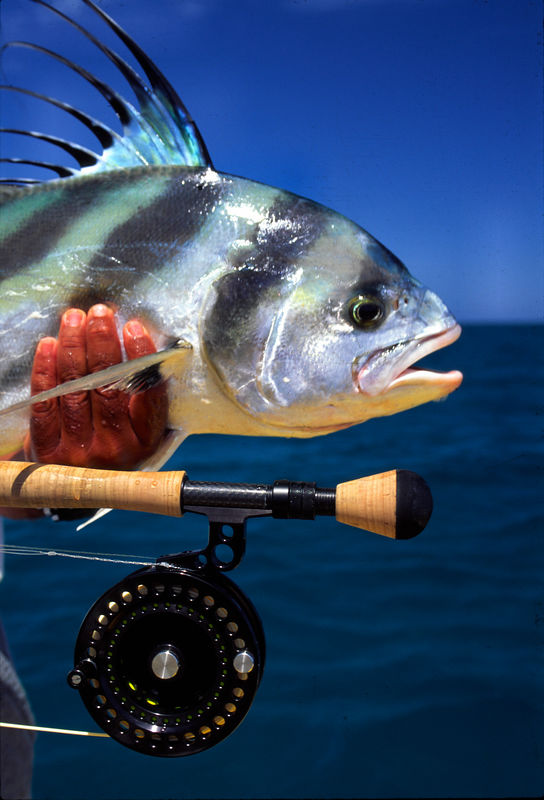 Blue Water Fly Fishing Roosterfish, Cabo San Lucas Mexico,