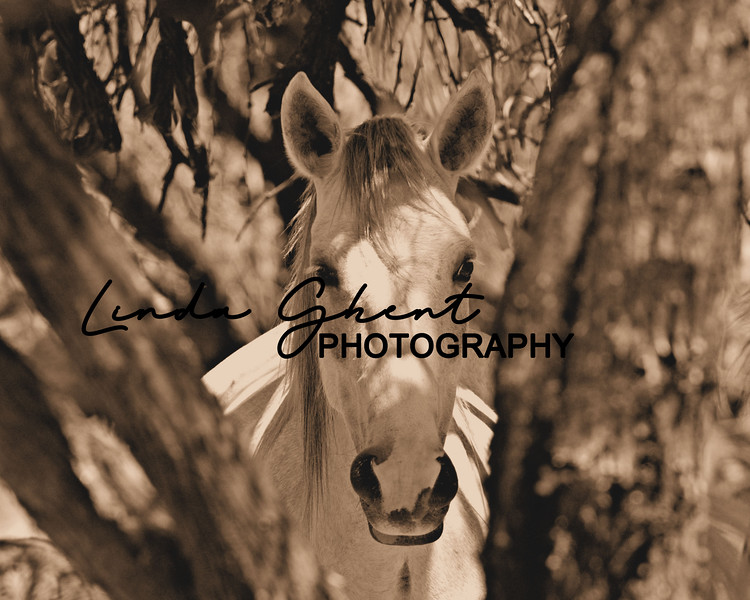 Salt River Stallion