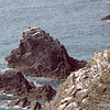 View of the sea stack just offshore