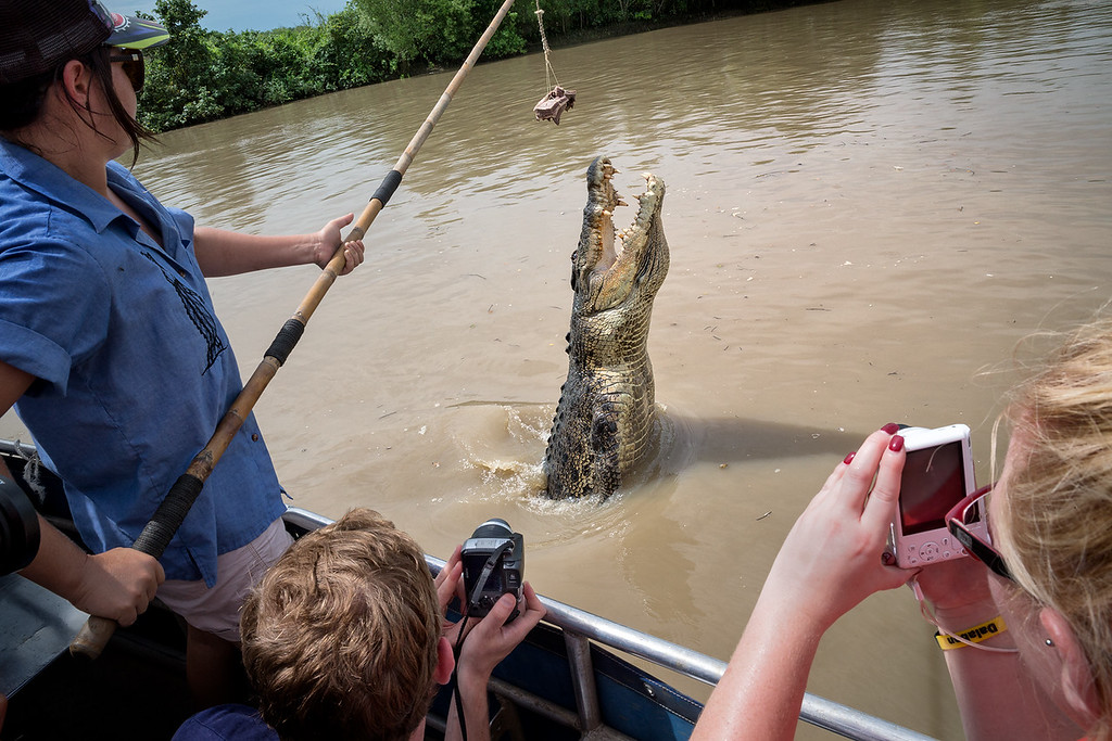 Tourists taking photos of jumping crocodiles