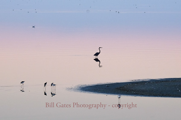 Birds of the Salton Sea