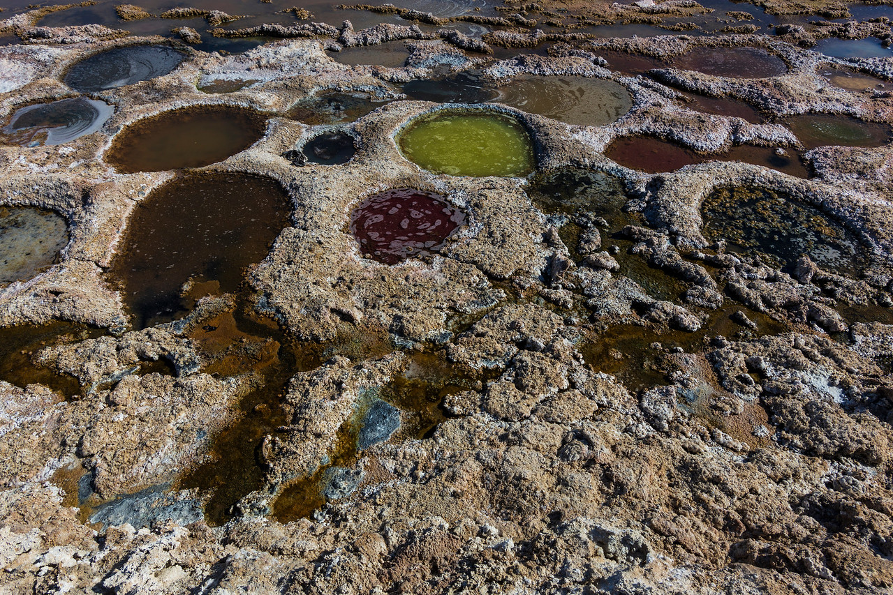 Tilapia nests at the Salton Sea