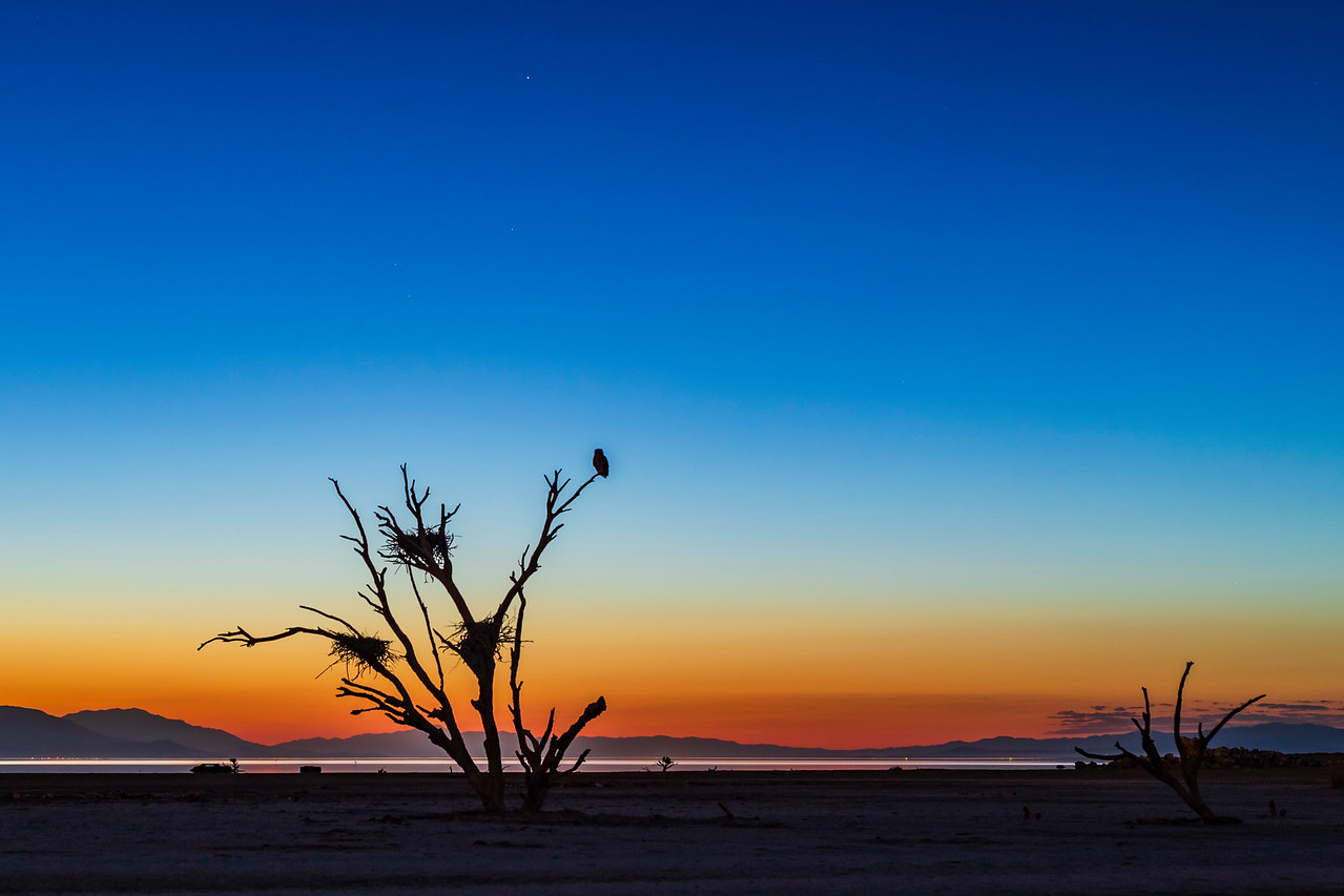 Bird In A Dead Tree During Twilight At The Salton Sea