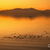 Salton Sea Golden Sunset