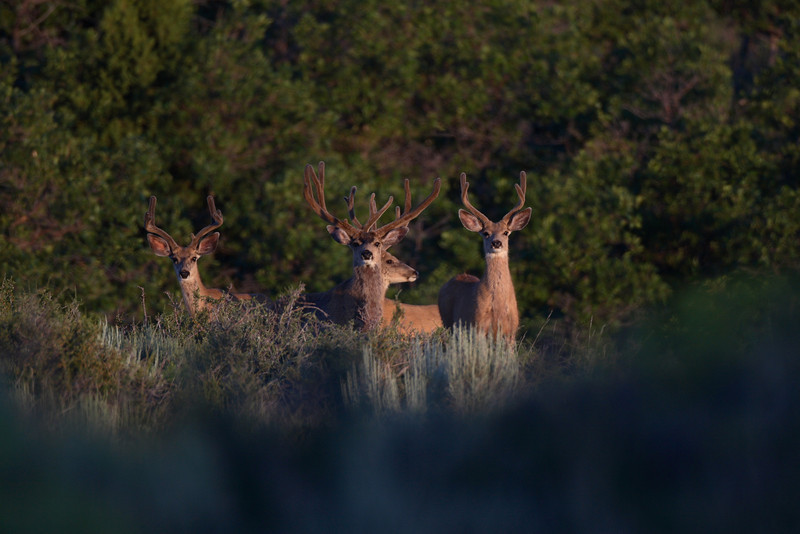 """4x3 and 35"""" wide, your Mgt buck. 2008 Photo. Jer has some great photos after he rubbed."""