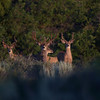 "4x3 and 35"" wide, your Mgt buck. 2008 Photo. Jer has some great photos after he rubbed."