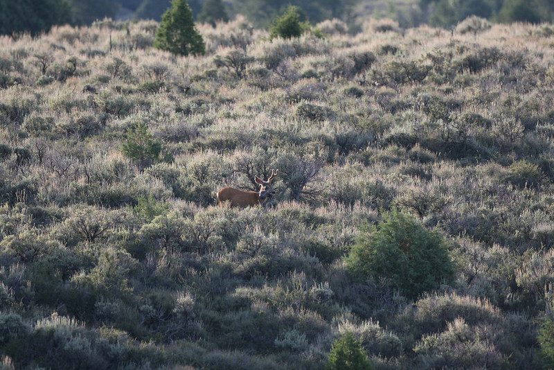 Zoom in on this buck if you want to see something strange??