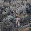 Saw this buck in September 2008. Hope to see more of him.