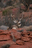 Pretty pose, the buck not that impressive. 2007 photo.