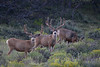 Buck on the left taken by an unknown hunter in 2007. The other is still roaming the hills, we think.