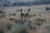 Alive and well after the 2008 season. If you look close you will see this same buck 3 consecutive years in this section. 2006 Photo