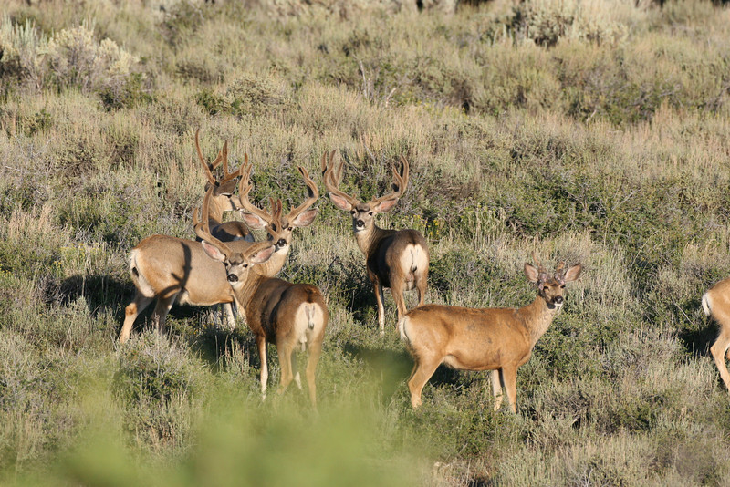 Many a hunter has tried to get this guy (center), but he has made it through the 2008 seaseon. 2007 Photo.