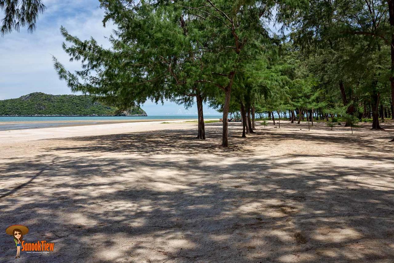 สวนสนสวยๆ หาดแหลมศาลา