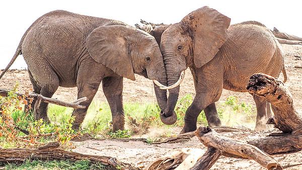 Samburu September 2018