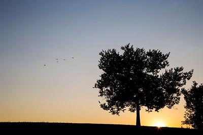 22_sun_bird_stack