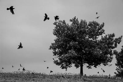 07_flock_blend_edit